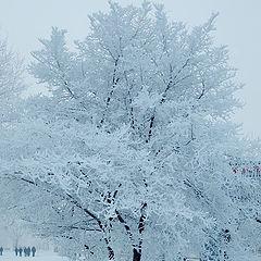 "album ""Winter is from Krasnoyars"""