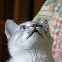 "фото ""О, мой кошачий Бог!"""