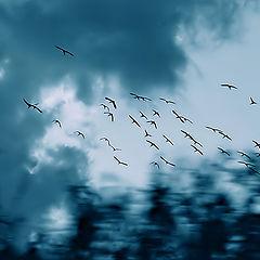 "фото ""... и тени чувств по воздуху бегут..."""