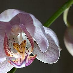 """фотоальбом """"Орхидеи"""""""