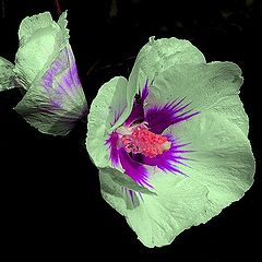 """photo """"summer flower"""""""