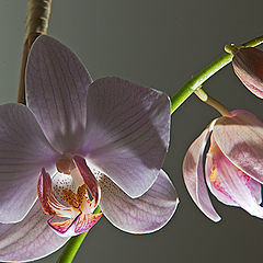 "photo ""Orchids & Light"""