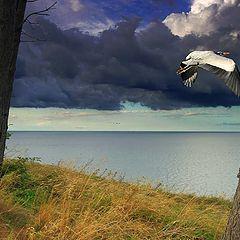 """фото """"Heron"""""""