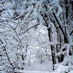 "photo ""Acvarel Winter"""