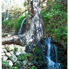 "photo ""Banias ."""
