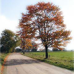 "фото ""autumn way to....."""