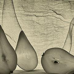 """фото """"Три груши"""""""
