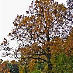 """фото """"Immemorial Oak. Autumn."""""""