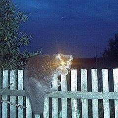 """фото """"Идет охота..."""""""