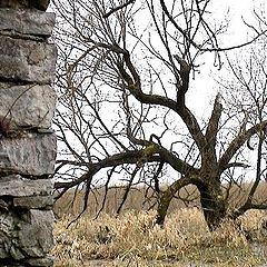 "фото ""Rock & Willow"""