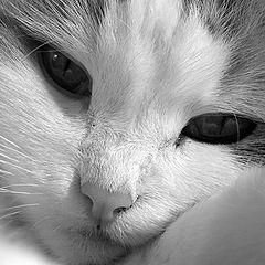 """фотоальбом """"Cats"""""""