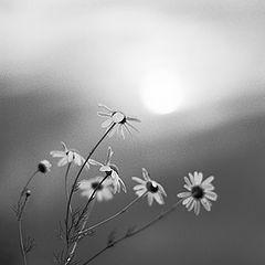 "photo ""Close to sun"""