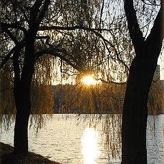 "фото ""Закат в листьях..."""