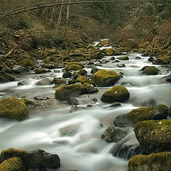 """фото """"Trout Creek"""""""