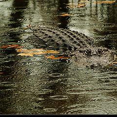 """фото """"Dangerous Rain..."""""""