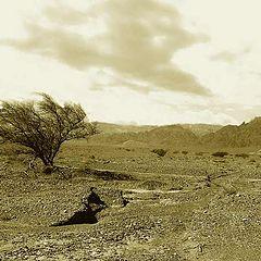 "photo ""Wind of the desert"""
