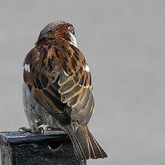 """photo """"Proud mountain bird )"""""""