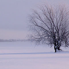 "photo ""syberian winter"""