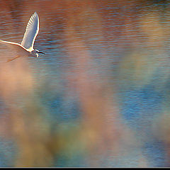 "photo ""A dream flight"""