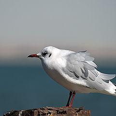 """photo """"Gull 1"""""""
