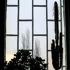"photo ""Winter sunrise"""