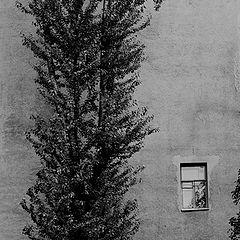 """фотоальбом """"стены"""""""