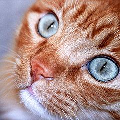 """photo """"A Cat"""""""