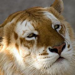"""фото """"beatifull amazing beast"""""""