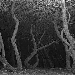 """фото """"Tree"""""""