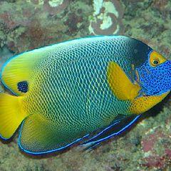 "фото ""Coloured fish"""