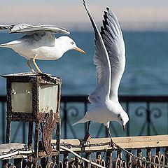 """photo """"Gulls 2"""""""