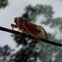 """фото """"Cicada X"""""""