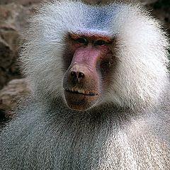 "photo ""Primate - like you and me.(2)"""