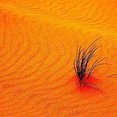 """фото """"Orange Sands"""""""