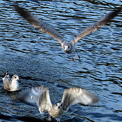 "фото ""Starts at Ladoga Lake"""