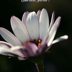 "photo ""Gabriella""s Flower"""