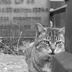 """фото """"Cemetery cat"""""""