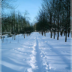 """фото """"Зима строит новые дороги..."""""""
