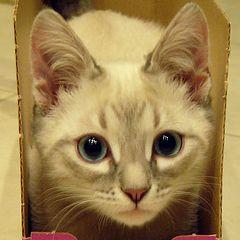 """фото """"Консервированный котенок :)"""""""
