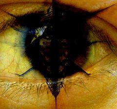 "фото ""Dark eye"""