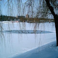 """фото """"Зимнее озеро"""""""
