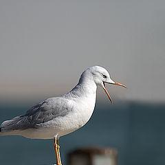 """photo """"Gull 3"""""""
