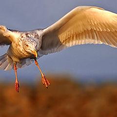 """photo """"Gull 5"""""""