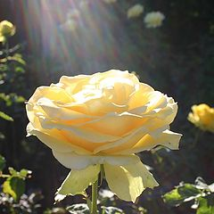 """photo """"The Glory Of Roses !"""""""