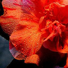 """фото """"Morning dew"""""""