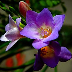 """photo """"flower for Valentine"""""""