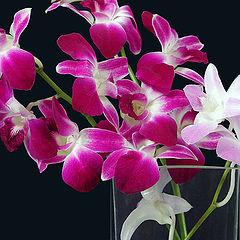 """фото """"Орхидеи :о)"""""""