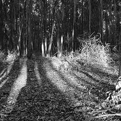 """photo """"Sombras del Bosque"""""""
