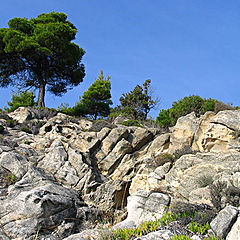 "фото ""Tree On The Rocks"""