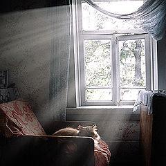 """фото """"sunshine"""""""
